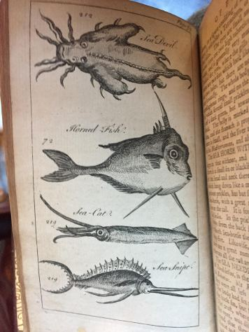 The Natural History of Fishes and Serpents