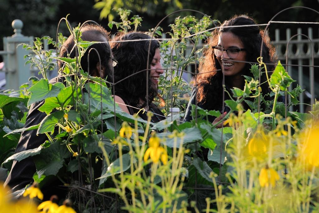 Chicagoans tending to a community garden